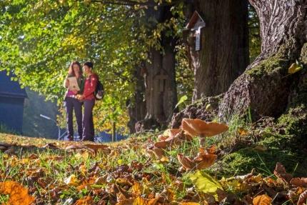 Abschalten im Sauerland im Herbst